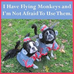 I want a flying monkey!