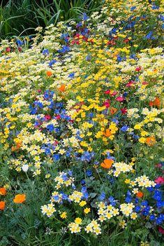 Flores do Campo - Equilíbrio, ponderação.