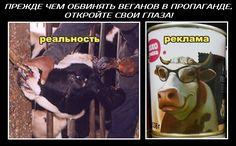 """""""Не навязывайте мне вегетарианство!"""" - http://veg.1bb.ru/viewtopic.php?id=34#p65 В несжатом качестве: https://vk.com/doc223333527_461622030?hash=917a780dfcac780529&dl=354e38007960329ceb"""