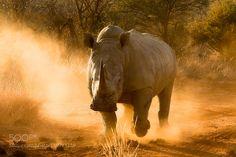 dusty story .. by Irca via http://ift.tt/1mXi2TE