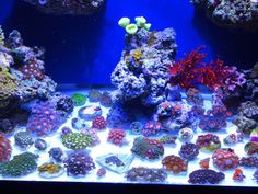 The Zoa and Paly Club - Page 2 - Coral Forum - Nano-Reef Community Saltwater Fish Tanks, Saltwater Aquarium, Nano Cube, Coral Reef Aquarium, Nano Tank, Coral Tank, Mint Color, Salt And Water, Ocean Life