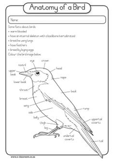 Bird Anatomy Worksheet To Fill Out You Need To Know The