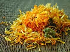 Homemade Calendula Oil - TheSoapCafe