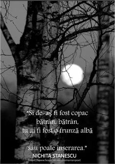 Moon, Celestial, Words, Quotes, Outdoor, Inspiration, Full Bed Loft, Dark Around Eyes, The Moon