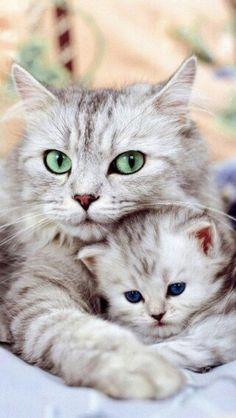 Mamma's eyes!
