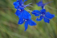 Sacha-Jakutien - WebSite - UpDate    #flower #flora #fauna #yakutia #jakutien #sacha-jakutien Flora, Website, Plants, Plant, Planets