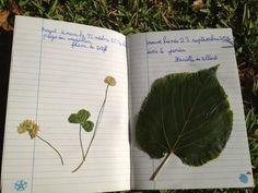 petits homeschoolers: Charlotte Mason: le journal de la nature
