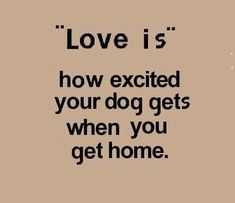 Exactly how our 4 dogs are when we get home. <3