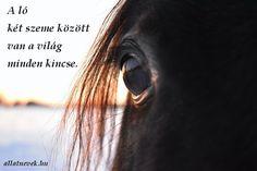 Equestrian Quotes, Horse Quotes, Horses, Humor, Animals, Photos, Animales, Pictures, Animaux