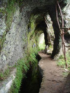 Ribeiro Frio – Portela (Levada Walk) - Flora Travel Madeira