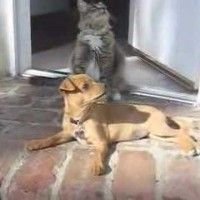Lacey the puppy and Hannah the kitty are the cutest best friends. Their owner says this happens all the time, and she was finally lucky enough to get the cuteness …