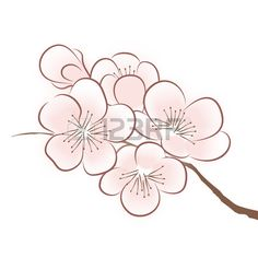 Cherry blossom vector by CatChat on VectorStock® - .- Cherry blossom vector by CatChat on VectorStock® – Cherry blossom vector by CatChat on VectorStock® – - Cherry Blossom Drawing, Cherry Blossom Vector, Cherry Blossom Wallpaper, Cherry Blossom Outline, Cherry Blossoms, Cherry Blossom Images, Blossom Trees, Blossom Flower, Flower Art