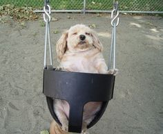 This tubby tub who knows the value of a nice breeze through your hair. | 27 Dogs Living Their Best Life