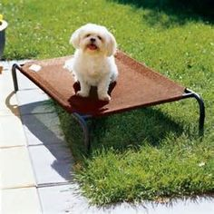 diy outdoor dog beds - Yahoo Image Search Results