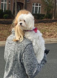 This is how you walk a Maltese.