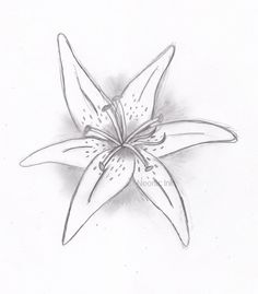 25 Best Tiger Lily Tattoo Drawings Images Lillies Tattoo Tiger