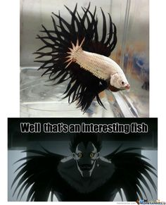 Now I want that fish so I can name it Ryuk. Ill feed it apples even if it isn't good for the fish!!