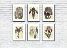 Iris/Flowers/Set of 6/Antique/Vintage/Decor/Wall Art/Old Pictures/Wall Printing/Style/Plants/Flowers Set Iris Flowers, Planting Flowers, As You Like, Just In Case, Frame Download, International Paper Sizes, Botanical Art, Poster Wall, Old Pictures