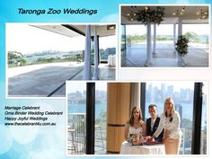 Weddings at the famous Taronga Zoo in Sydney Wedding Locations, Wedding Venues, Marriage Celebrant, Sydney Wedding, Indoor Wedding, Weddings, City, Celebrities, Beach