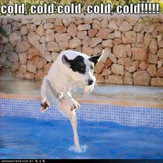 Funny Pictures Swimming Pictures