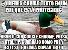 Consejos del pato