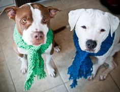 This lovely blogger fosters doggies and helps them heal.