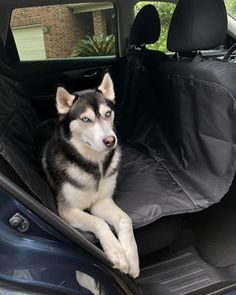 Official Website 1pc Blue Floral Pet Dog Car Seat Cover Pad Pet Rear Seat Cushion Mat Blanket Hammock Safe Dog Car Seat Back Protector Waterproof Numerous In Variety Seat Supports