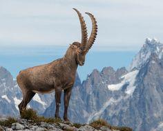 Vue sur le Mont BlancbyEFPhotography