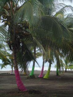 Puerto Viejo Limon, Costa Rica