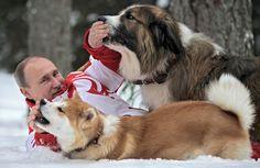 """Buffi y Yume. Los perros de Putin. El gran Buffi fue un regalo de su homólogo búlgaro Boyko Borisov, mientras que la perrita Yume fue un obsequio de la prefectura japonesa de Akita por la ayuda de Rusia tras el terremoto y tsunami que asoló la costa japonesa en marzo de 2011. La raza de Yume, cuyo nombre significa """"sueño"""" en japonés, está en peligro de extinción. Por eso cuando lo llevaron a Rusia viajó con un asiento VIP en primera clase. www.albertalagrup.com"""