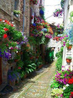 Streets of Spello, Italy