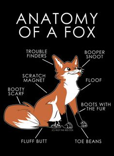 Anatomy of a fox t-shirt fox art, animal drawings, cute drawings, Cute Funny Animals, Funny Cute, Animal Drawings, Cute Drawings, Cute Fox Drawing, Fox Anatomy, Fox Art, Red Fox, Furry Art