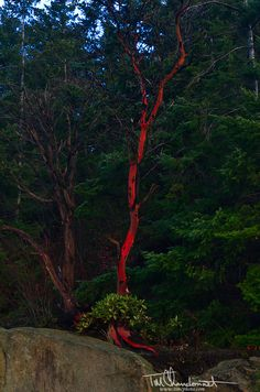 TCP-Landscape-WA-Larrabee-State-Park-9819.jpg (496×750)