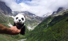 Der Panda vor dem Wendengletscher Panda Bear, Setting Goals, Switzerland, Panda, Pandas