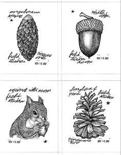 acorns, squirrel, pine cone sketch