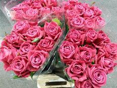 #Rose #Rose #Princess #Moneerah; Available at www.barendsen.nl