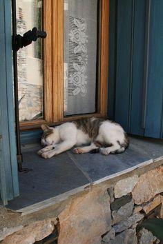 .kitty on the window ledge.