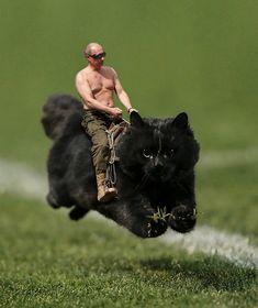 Putin On The Cat