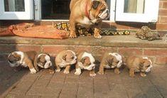 cachorritos hermosos