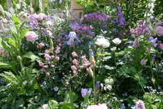 Article: showcasing new trends from Chelsea Flower Show 2016
