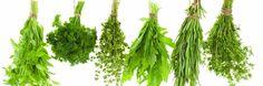 We hebben het hier over kruiden en planten met een geneeskrachtige werking. Soms omstreden, soms bewezen geacht, maar zelden gevaarlijk, en meestal zonder bijwerkingen. De enen zijn pro, de anderen