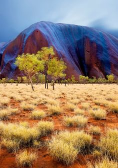 natgeotravel:  Rain transitions the famous Uluru rock from red to blue.  Photograph by Julie Fletcher