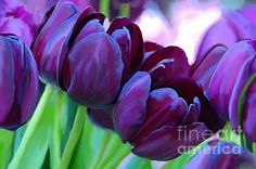 "<a href=""http://fineartamerica.com/art/paintings/tulips/all"" style=""font: 10pt arial; text-decoration: underline;"">tulips paintings for sale</a>"