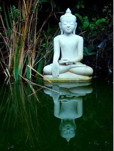 Zen To me, this is not an endorsement of a particular religion, rather the idea of harmony and quiet peace in one's life.a life in balance Lotus Buddha, Art Buddha, Buddha Statues, Buddha Wisdom, Zen Meditation, Chakra Meditation, Namaste, Little Buddha, Thomas Merton