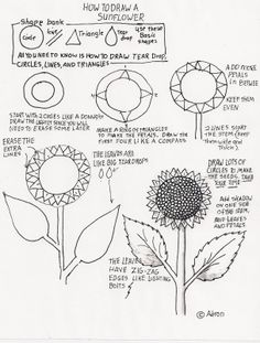 How to Draw Worksheets for Young Artist: How to Draw A Sunflower, Lesson For Young Artist...check out the raccoon worksheet too