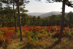 4. Talimena National Scenic Byway