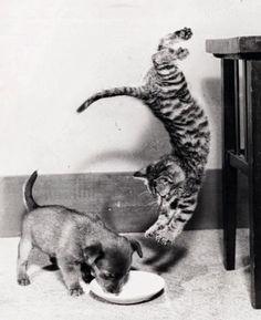 10доказательств того, что коты умеют летать