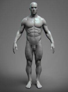 ArtStation - Anatomy Male Tool Reference for Artists ! , Pascal Ackermann