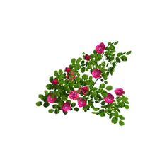 rose bush.png ❤ liked on Polyvore featuring flowers, plants, roses, floral, green and filler