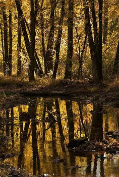 autumn reflection, Watchung Reservation, Union County, New Jersey. Spent alot of time here late early Our escape from suburbia. Jersey Girl, New Jersey, Dark Tree, Delaware River, Autumn Scenery, John Muir, Beautiful Images, State Parks, Reflection